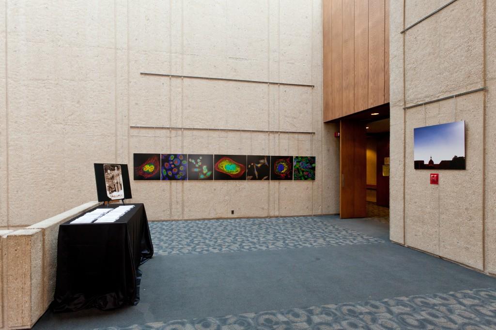 Art show display
