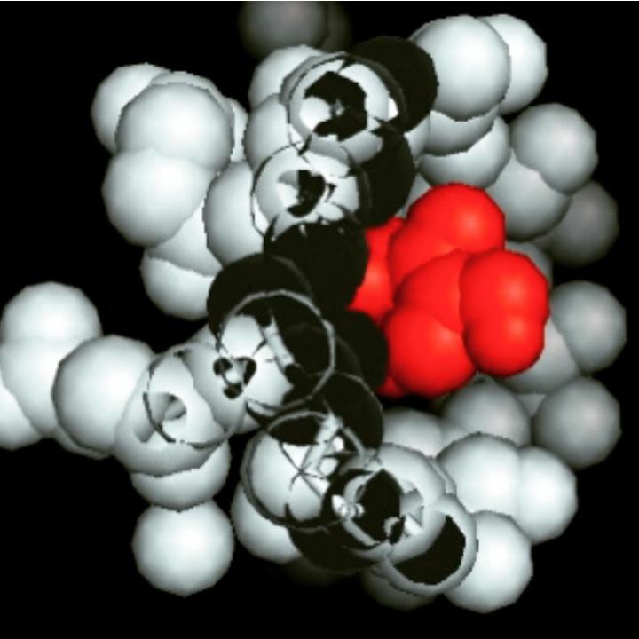 sugar molecules