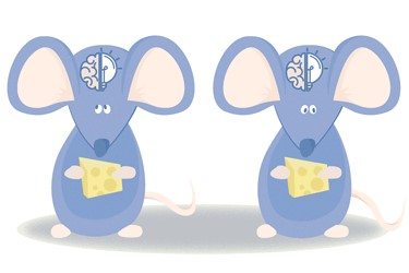 Caption: A normal mouse (left) stops eating when certain nerve cells in the brain signal to do so. Nerve cells missing the enzyme OGT don't signal, so those mice eat more at each meal and become obese (right). (Credit: Johns Hopkins Medicine)